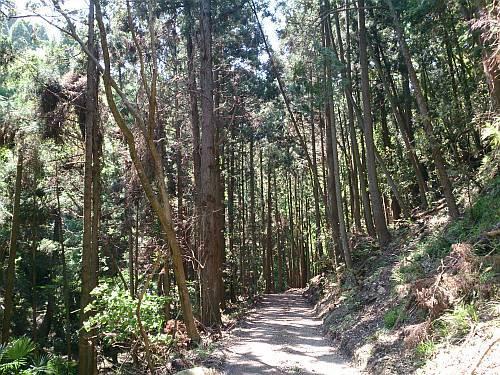 笹で林道工事中