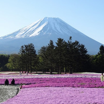 富士山周辺旅行(4)