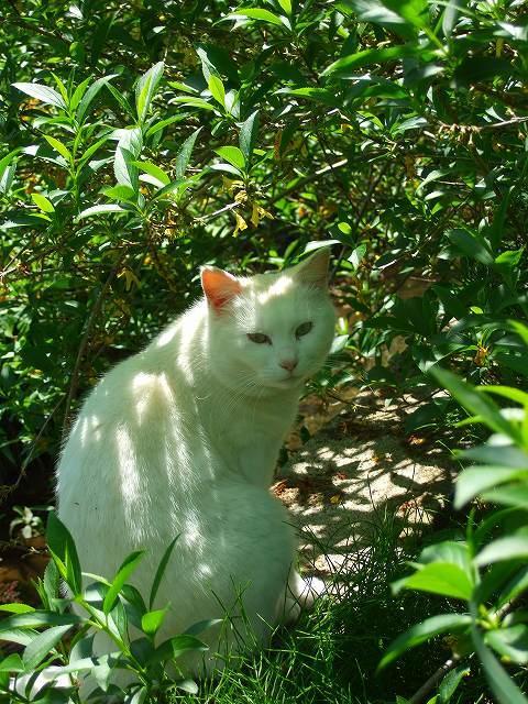 相馬神社の猫