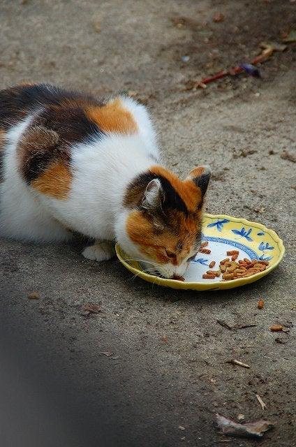三毛猫母さん