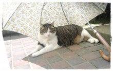日傘を通販で買ったけど~w