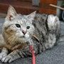 愛猫くんの糖尿病のお…