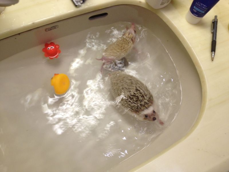 風呂 お風呂でダイエット お腹 : ハリネズミのお風呂|悠々と ...