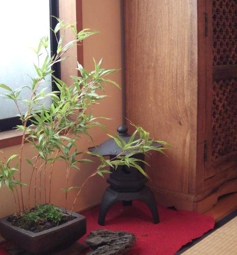 琳葉盆栽 カンチク