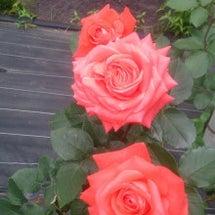 盛岡城跡公園 薔薇