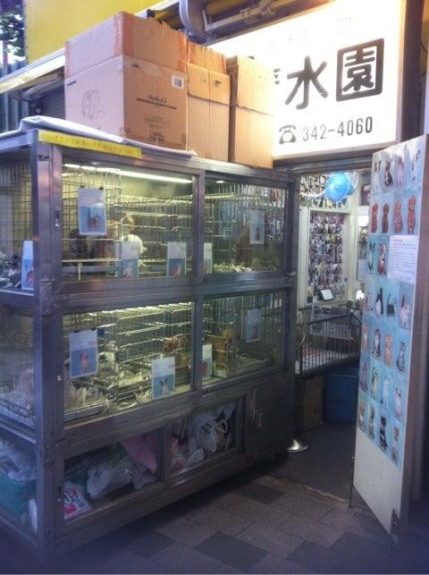 東急東横線新丸子駅周辺を歩く: 写真撮っけど,さ …