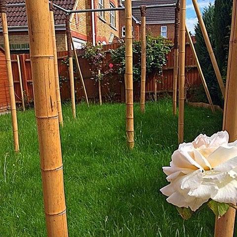 1406 missing my bamboo bars