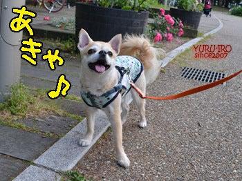 2014komugi-san_0619003