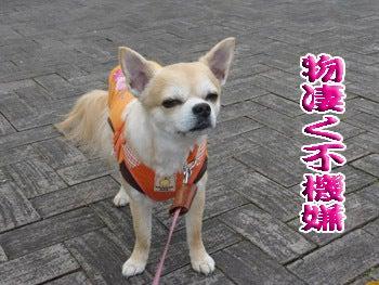 2014komugi-san_0619001