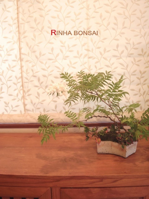 琳葉盆栽 穂咲ナナカマド