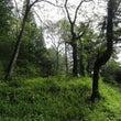 小屋周りの草刈り