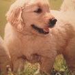 犬の食生活について