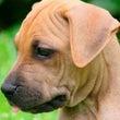 愛犬の健康管理につい…