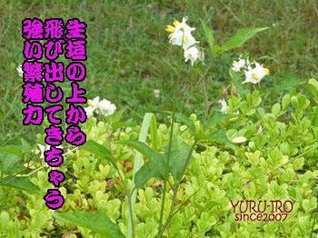 2014komugi-san_0624006