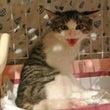 交通事故の猫