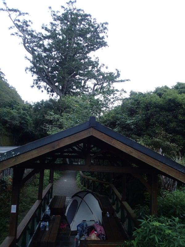 ご神木とテント