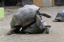 ゾウガメの営み