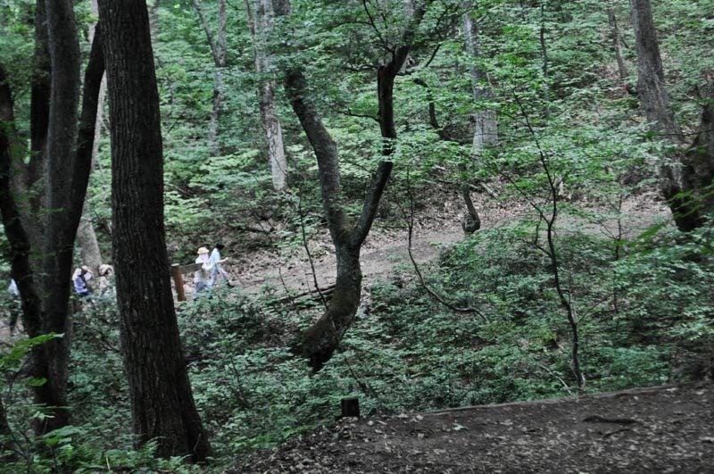 白神の森遊山道トレッキング