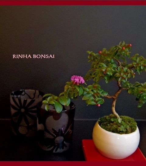 琳葉盆栽 BONSAI サルスベリ