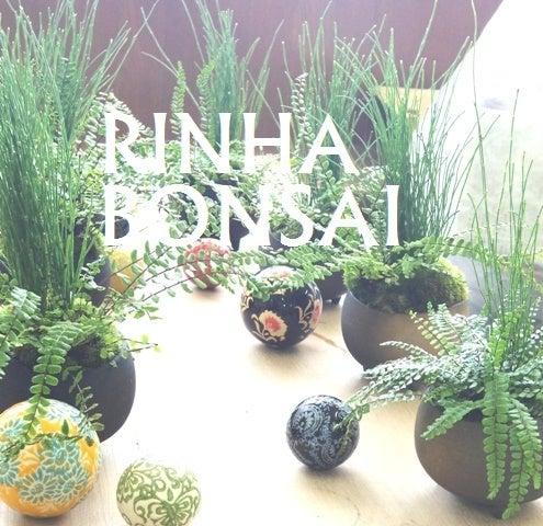 琳葉盆栽 BONSAI チャセンシダ