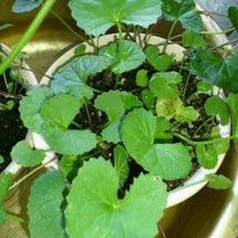 アンチエイジング野菜