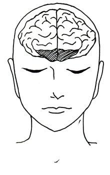 前頭前皮質