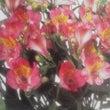 ★誕生花と幸せの花言…