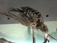 恐竜博物館⑮