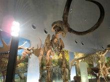 恐竜博物館⑯