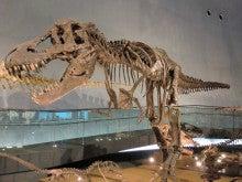 恐竜博物館⑨