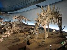 恐竜博物館⑫