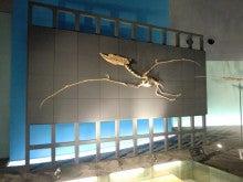 恐竜博物館⑬