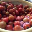 新鮮な無農薬栽培のト…