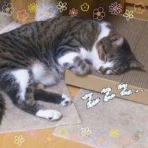 いい枕だねぇ(-_-…