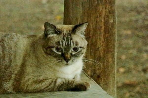 おいしそうな脚の女子校生 243脚目猫ガイジ隔離スレ [無断転載禁止]©bbspink.comYouTube動画>1本 ->画像>3155枚