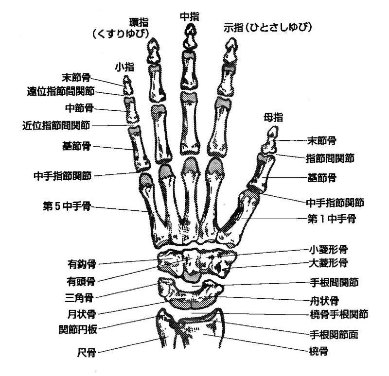 指・手首の関節