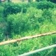 草刈りキャンペーン実…