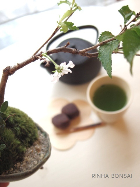 琳葉盆栽 十月桜