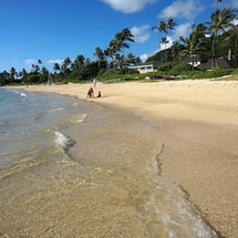 ハワイ「そうじ力」セ…