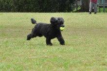 犬トレーニング
