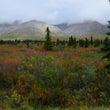 アラスカの秋のいろ