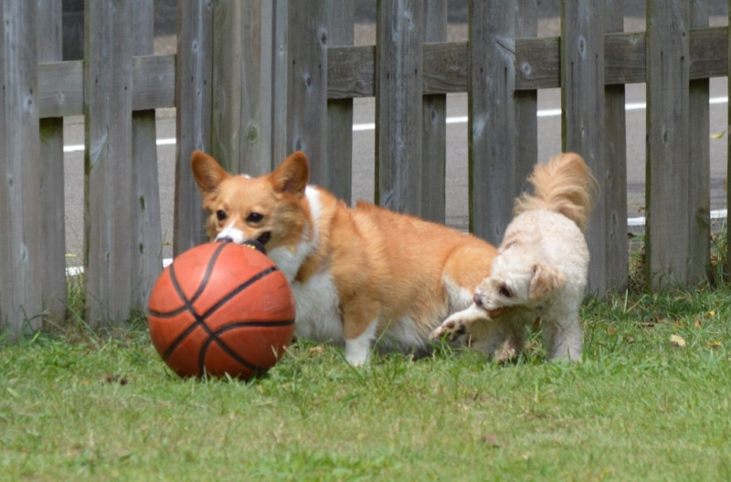 ボール遊び1