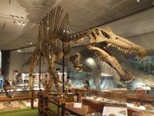 スピノサウルス化石画像