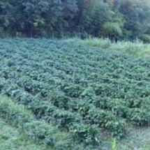電気柵設置・草刈り・…