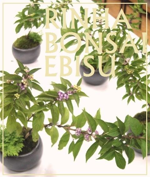 琳葉盆栽 ムラサキシキブ