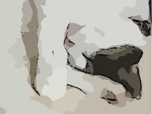 エフェクト1猫