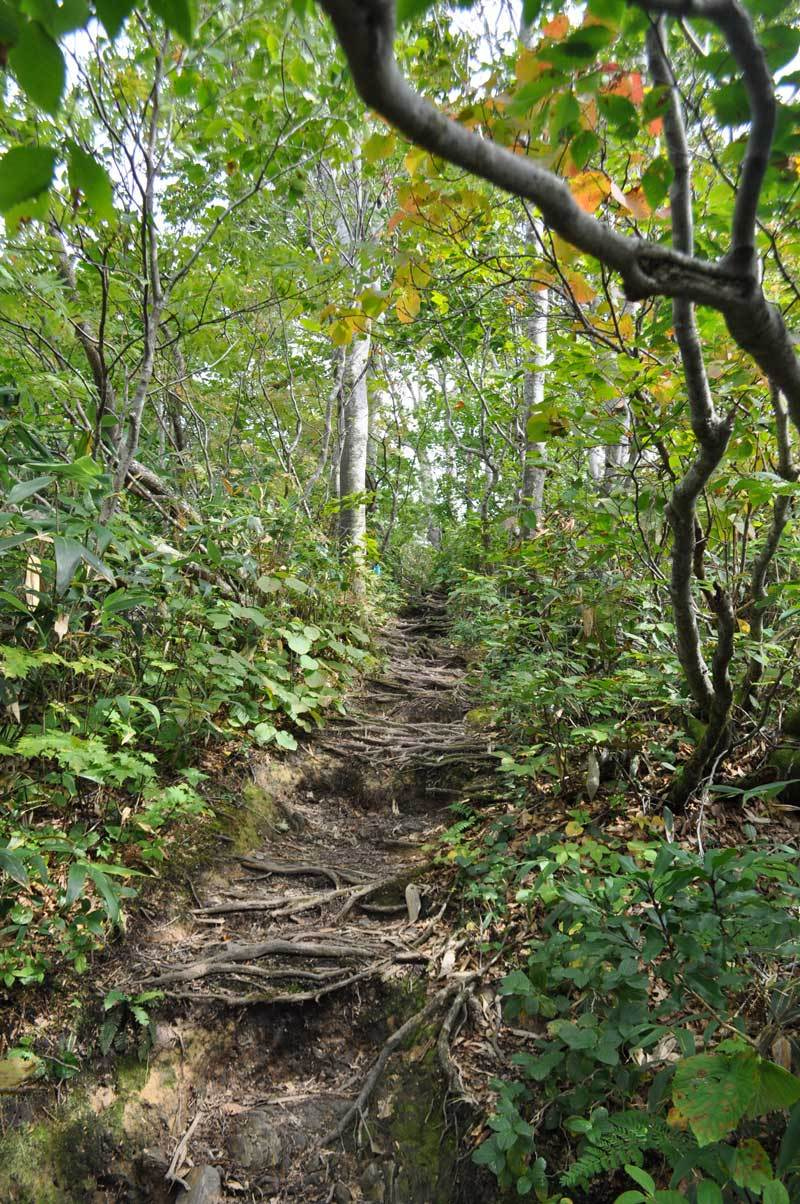 世界遺産白神山地「二ツ森」の紅葉状況11
