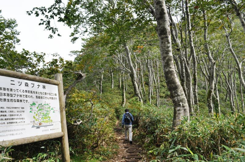 世界遺産白神山地「二ツ森」の紅葉状況10