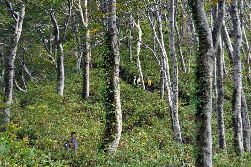 世界遺産白神山地「二ツ森」の紅葉状況9
