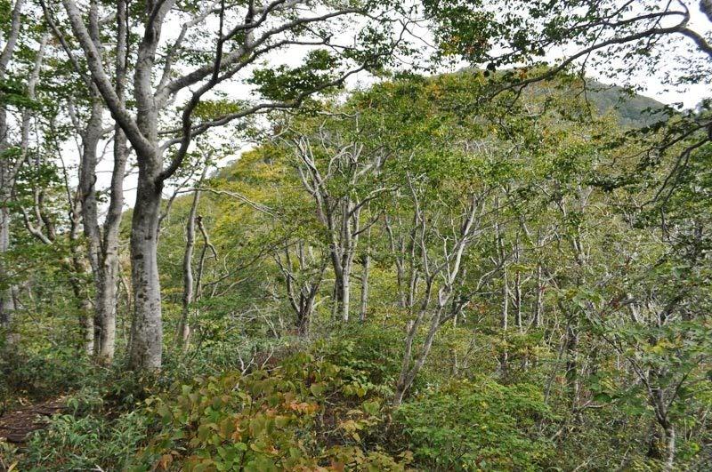 世界遺産白神山地「二ツ森」の紅葉状況12